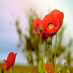 Lest we forget - by Lisa Sabater-Mozo